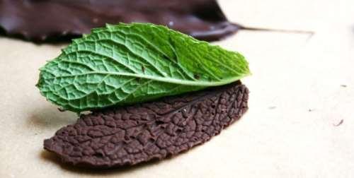 Come fare le foglie di cioccolato